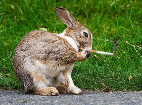 a smoking bunny