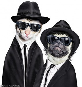 gatos-blues-brothers