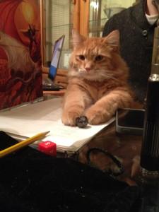 1 gato mestre
