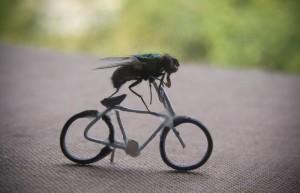 1 mosca volante